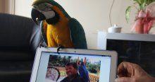 Özal'ın papağanı 22 yıldır 'babasını' unutamıyor