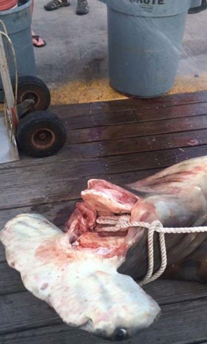 Balıkçılar içinden çıkanları görünce inanamadı
