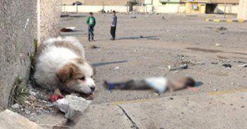 Canilerin cesetleri kedi-köpeğe yem oldu
