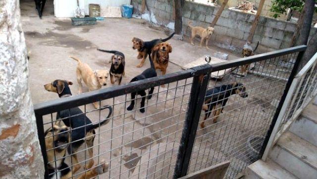 Evinde 18 köpek besleyen kadının komşuları isyan etti