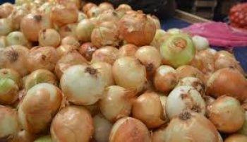 'Patates soğan 1,5 lira olacak'