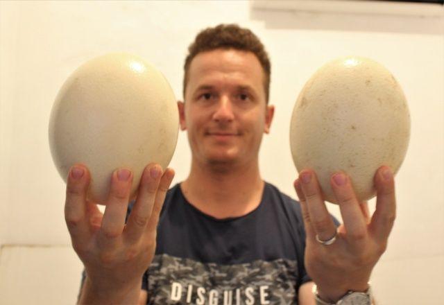 1,5 ayda yumurtadan çıkıyor, tanesi 500 liradan alıcı buluyor
