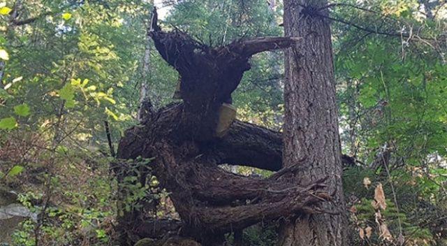 Ormanda onu gören ardına bakmadan kaçıyor! Bir de yakından bakın...