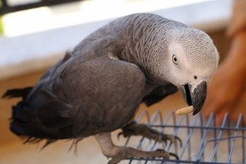 Bulduğu papağanın söyledikleri karşısında şoke oldu