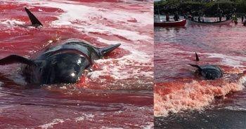 Faroe Adaları'nda korkunç görüntüler!