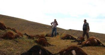 Iğdır'da 74 koyun telef oldu
