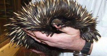 İlk kez göreceğiniz dünyanın en garip canlıları
