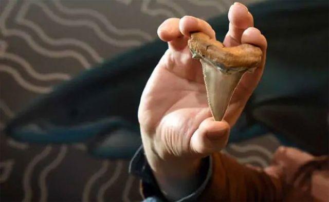 Tam 25 milyon yıllık, 45 adet buldular