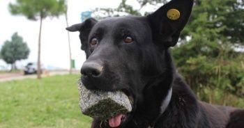 3 yıldır ağzında taşla geziyor! Nedenini duyanların gözleri doluyor