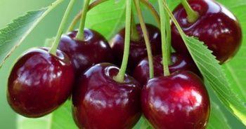 Ağrı kesiciden 10 kat daha etkili bir besin: Kiraz!