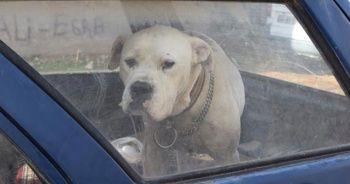 Arabanın içinde gördüler, kimse yaklaşamadı...