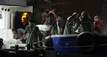 Zonguldak açıklarında 500 ton 'hamsi' avlandı