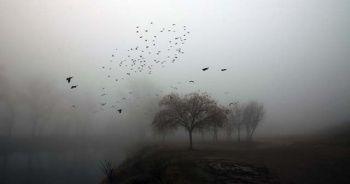 Edirne'de kartpostallık sis manzaraları