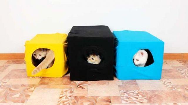 Karton Kutudan Kedi EviYapımı Karton Kutudan Kedi Evi Nasıl Yapılır