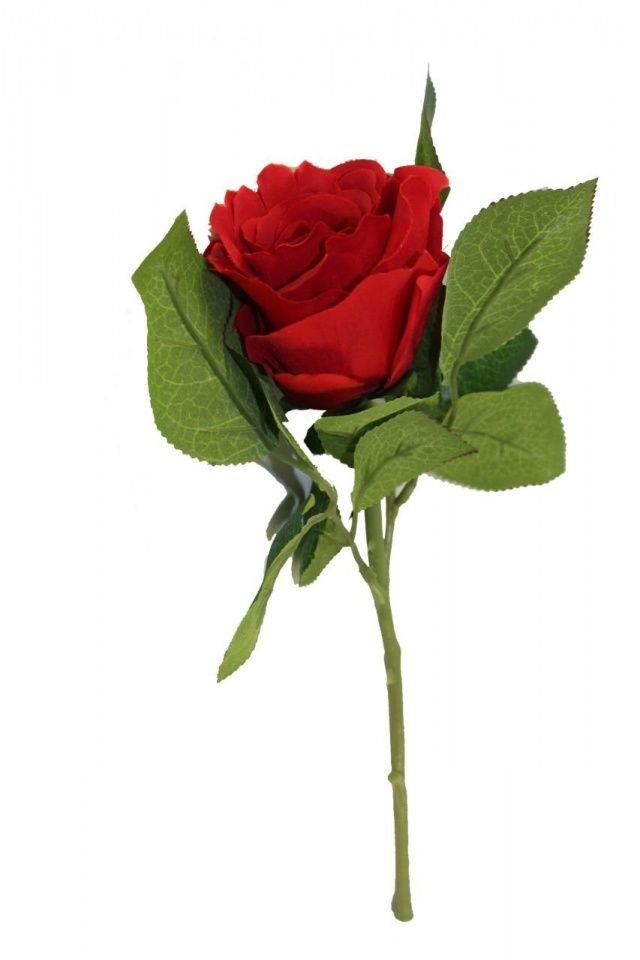 En güzel çiçekler ve anlamları, hikayeleri ve En güzel çiçeklerin verdiği mesajlar