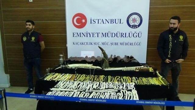 İstanbul'da 1.5 milyonluk 'fil dişi' operasyonu