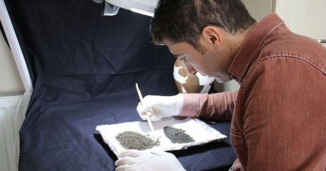 Kazıda bulunan buğday taneleri tam 4 bin 500 yıllık çıktı