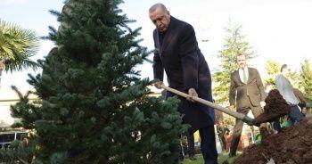 Cumhurbaşkanı Erdoğan İstanbul'da fidan dikimine katıldı