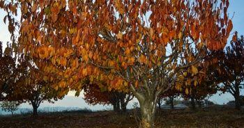Gördes'te kartpostallık sonbahar manzaraları