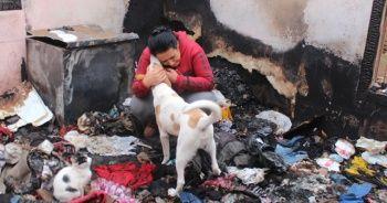 Kanser hastası kadın 15 kedi ve 2 köpeğiyle evsiz kaldı