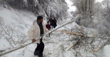 Aşırı kar ağaçları devirdi, elektrik tellerini kopardı