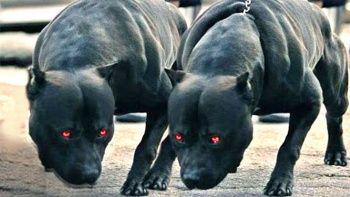 Dünyanın En Tehlikeli Köpekleri