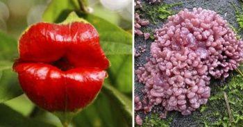 İnsan Uzuvlarına Benzeyen Tehlikeli Mantar Türleri ve Bitkiler