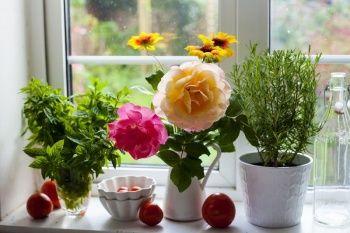 Evde Bakımı Kolay En Güzel Çiçek ve Bitki Türleri