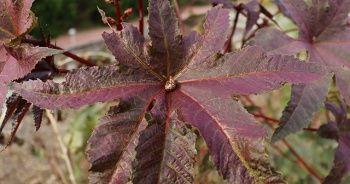 Rengi ve görüntüsüyle cezbeden bu bitkiler zehirliyor