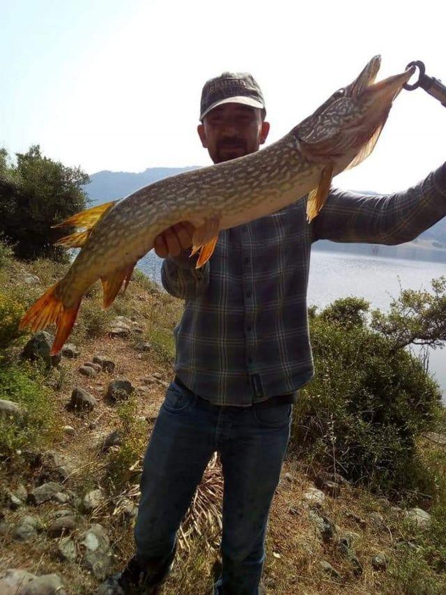 Onun tutkusu bir başka: Balıklara sarılan adam