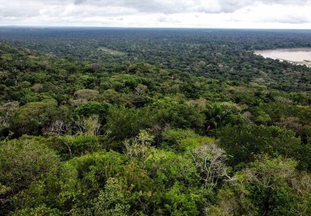 Amazonları'da biyoçeşitlilik