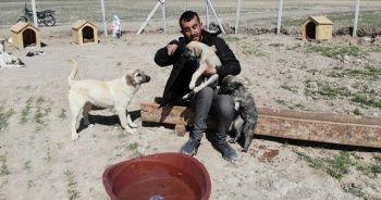 """Köpekleriyle köyünden kovulan engelli genç, kendini """"Canlar""""ına adadı"""