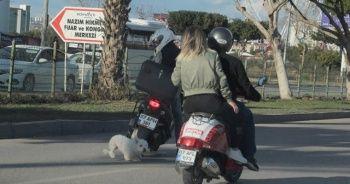 Sahibini kaybeden köpek trafiği birbirine kattı