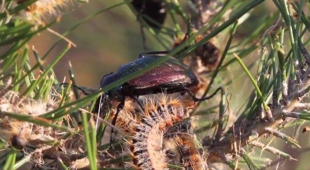 Terminatör böcekler işbaşında