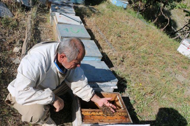 Kuraklık nedeniyle aç kalan arıları balla besliyorlar