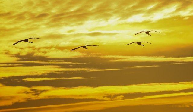 İzmir Kuş Cenneti'nde görsel şölen