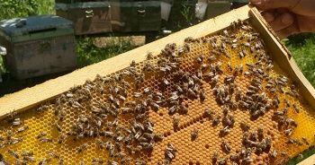 Arı üreticilerini bekleyen tehlike
