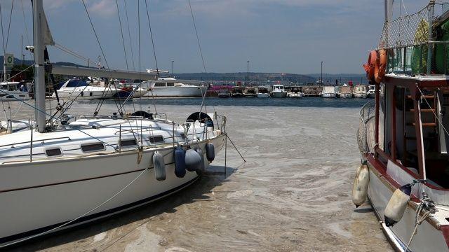 Marmara Denizi'nde deniz salyası temizliği başladı!