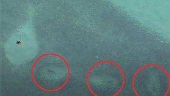 Korku dolu anlar: Köpekbalıkları plajda sörfçülerin etrafını sardı
