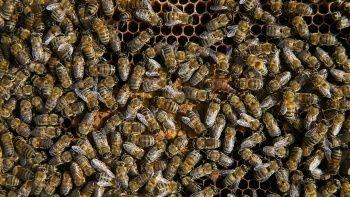 Zehirden gelen şifa: Doğal arı ürünleri