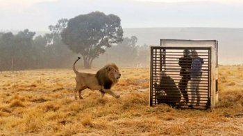 Bu hayvanat bahçesinde hayvanlar değil insanlar kafeste