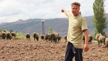 Üç dil bilen turizmci parayı çobanlıkta buldu