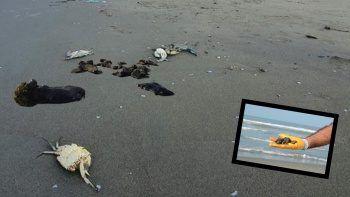 Mersin sahillerinde petrolden ölen hayvanlar kıyıya vurdu