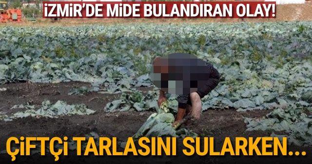 İzmir'de mide bulandıran olay! lağım suyu ile sulanan tarlaya baskın