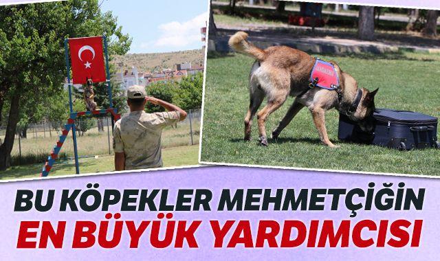 Bu köpekler Mehmetçiğin en büyük yardımcısı