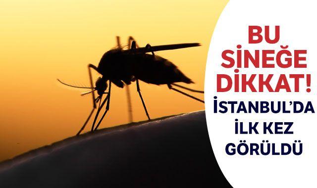Bu sineğe dikkat! İstanbul'da ilk kez görüldü