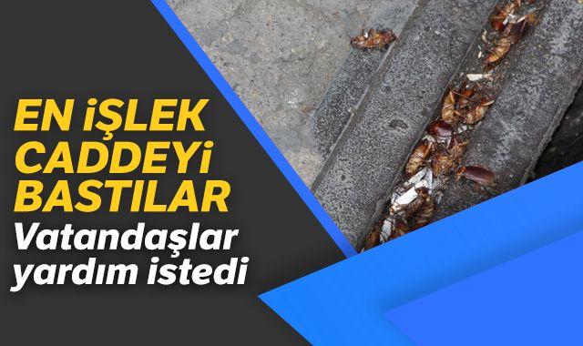 Trabzon'un en işlek caddesini 'Kakalaklar' bastı