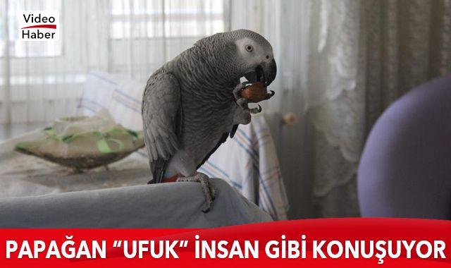 """Papağan """"Ufuk"""" insan gibi konuşuyor"""