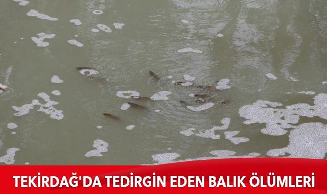 Tekirdağ'da tedirgin eden balık ölümleri