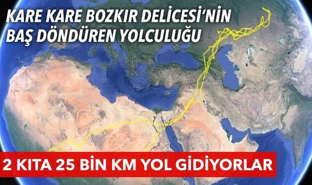 """2 kıta, 13 ülke, 25 bin km yol! """"Bozkır delicesi""""nin göç yolculuğu"""